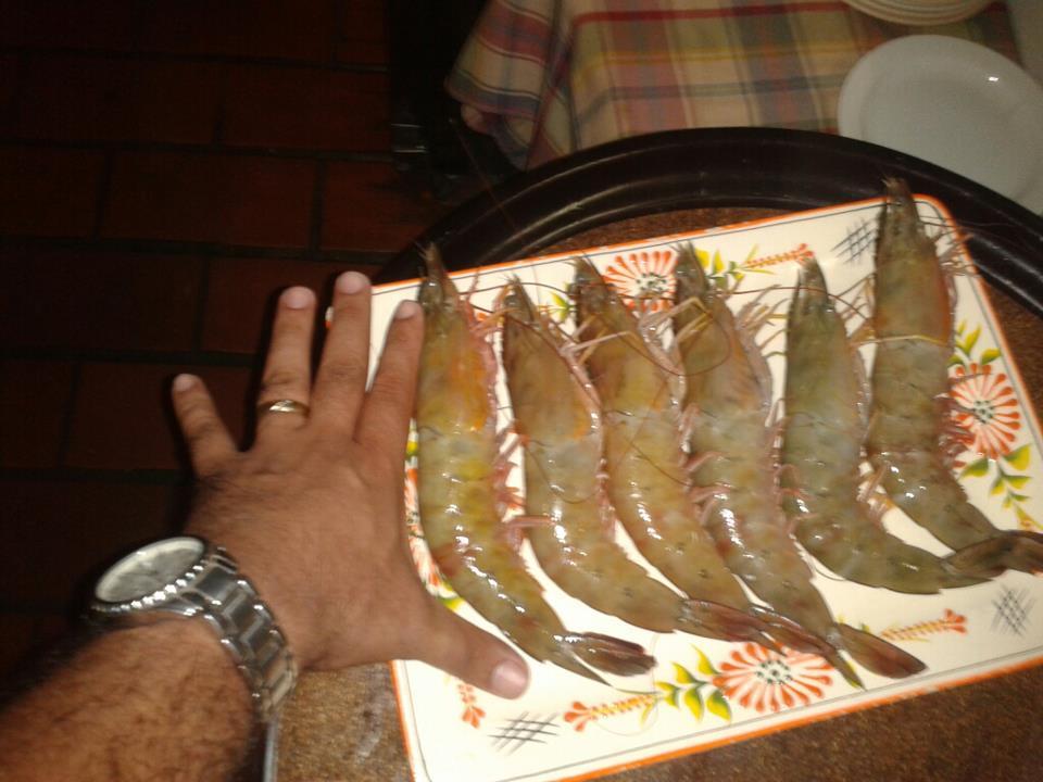 Brujo Fish